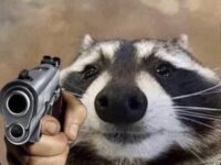 A photo edited photo of a close-up of a raccoon with a clearly fake superimposed hand holding a gun on it.